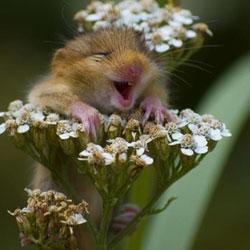 probiotics reduce stress in mice