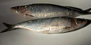 fermented-sardines-recipes